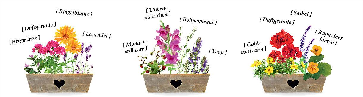 Bauerngarten im Blumenkasten – drei Beispiele