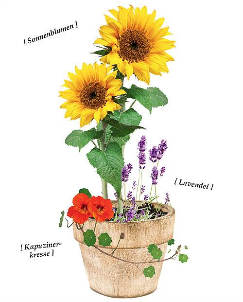 Blumentopf im Bauerngarten-Stil
