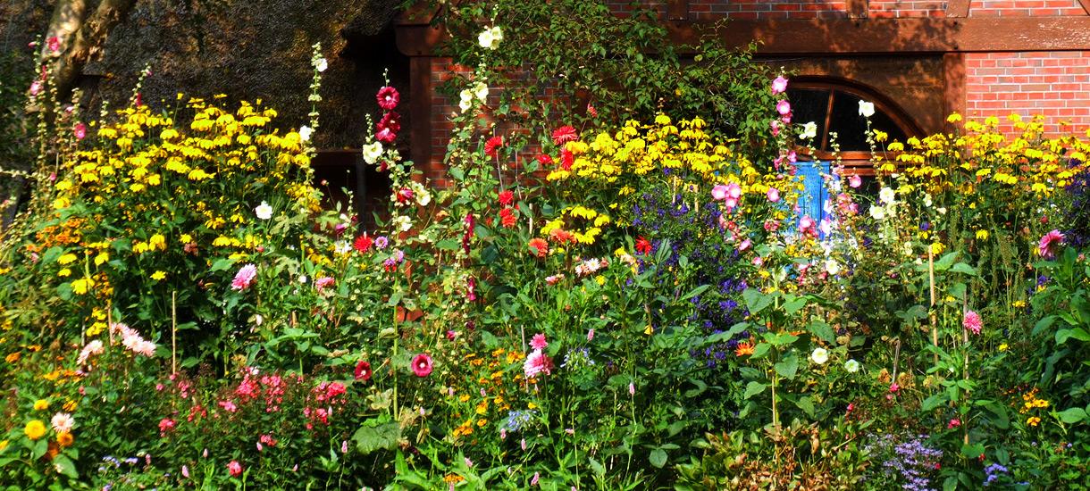 Bauerngarten in voller Blüte