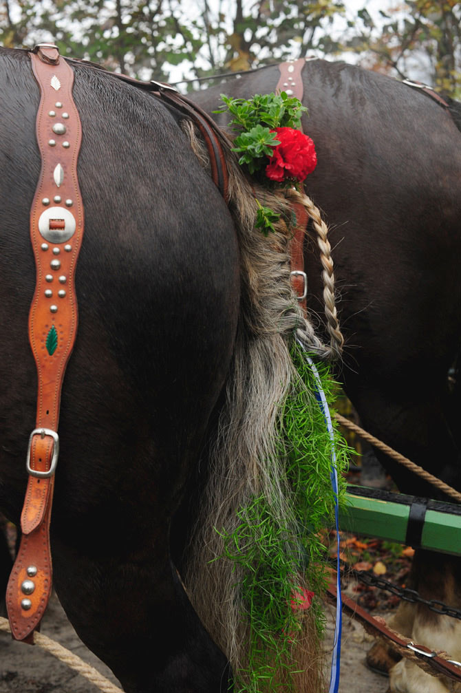 Leonhardifahrt – Geschmückte Pferde