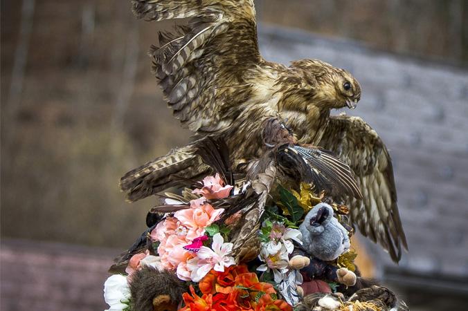 Fetzenfasching Ebensee - Hut mit Vogel