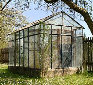 Gartentipps im Februar: Gewächshaus