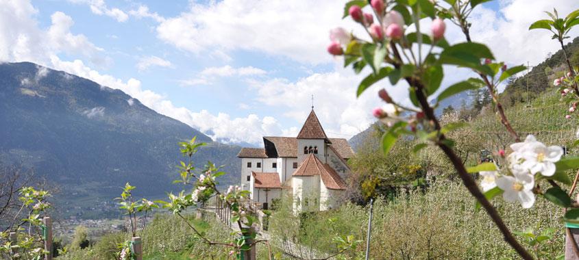 Blütezeit – Apfelblüte in Südtirol