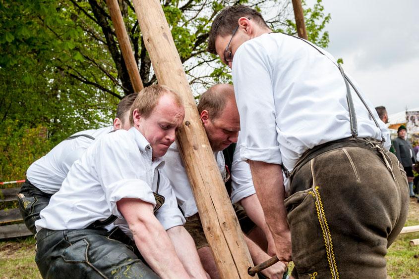 Männer halten eine Stange um den Maibaum aufzustellen und sind dabei angestrengt