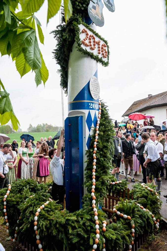 Ein stehender Maibaum der traditionell mit Zunftschildern, der Fahne – und einer Eierkette als Symbol der Fruchtbarkeit dekoriert ist.