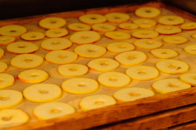 Apfelernte am Bodensee – Apfelscheiben auf einem Holzgitter