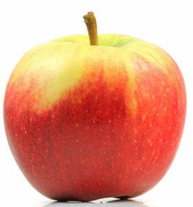 Apfelernte am Bodensee – Äpfel der Sorte Elstar