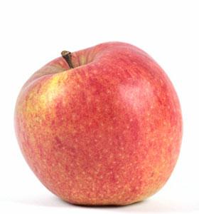 Apfelernte am Bodensee – Apfel der Sorte Jonagold