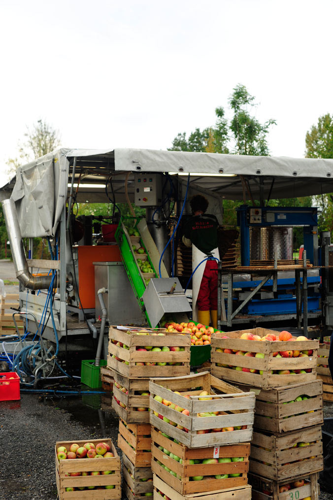 Apfelernte am Bodensee – volle Apfelkisten vor der mobilen Saftpresse