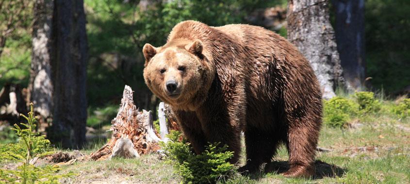 Ausflug am Muttertag zum Wilden Berg in Mautern mit Bärenfütterung