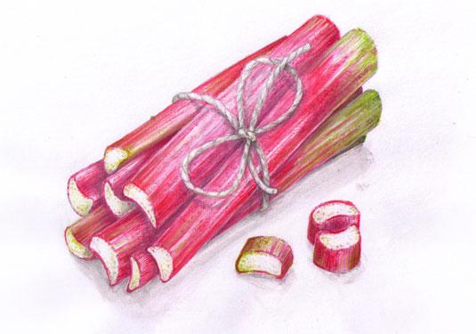 Illustrierte rote Rhabarberstangen