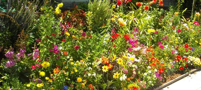 Hitze im Garten: Blumenbeet vor einem Haus