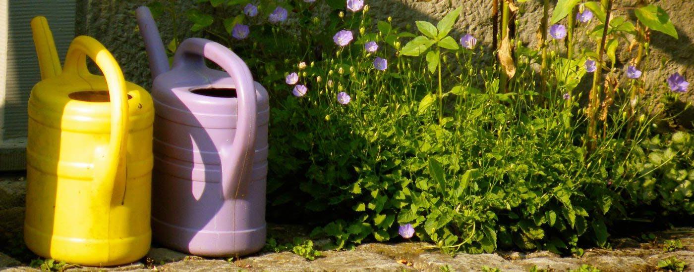 Hitze im Garten: Blumenbeet mit Gießkanne
