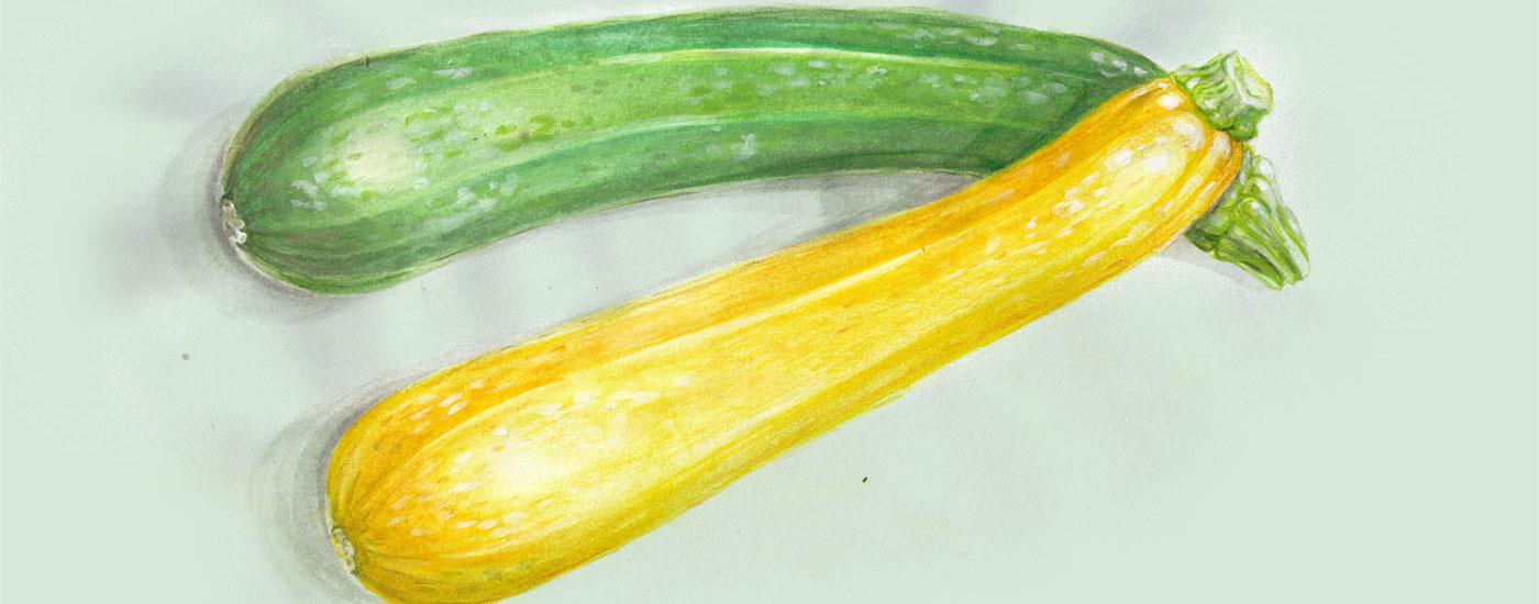 Zucchini-Rezepte: Illustration