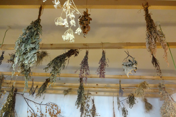 In der Salbenküche hängen getrocknete Kräuter von der Decke