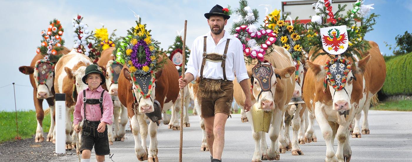 Almabtrieb im Alpbachtal - Geschmückte Kühe werden von einem Mann und einem Jungen in Tracht ins Tal gebracht