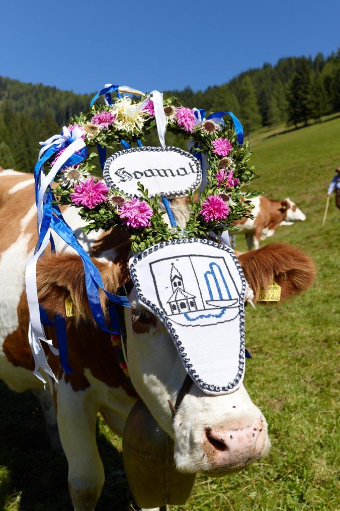 Almabtrieb in Bad Kleinkirchheim: Prächtig geschmückte Kuh