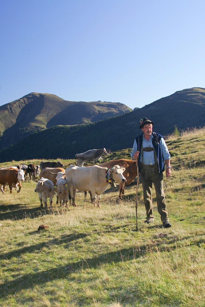 Almabtrieb in Bad Kleinkirchheim: Kühe auf Bergwiese