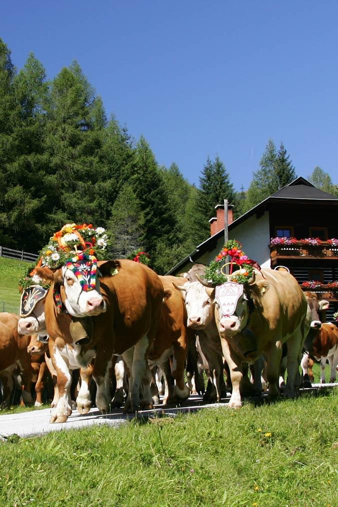 Almabtrieb in Bad Kleinkirchheim: Geschmückte Kühe auf der Straße