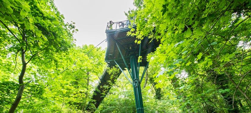 Der Baumkronenweg im Tiergarten Schönbrunn in Wien inmitten von Bäumen