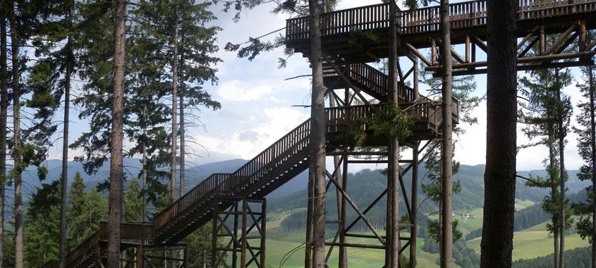 Der Wipfelwanderweg Rachau mit Ausblick auf die umliegenden Berge und Wälder