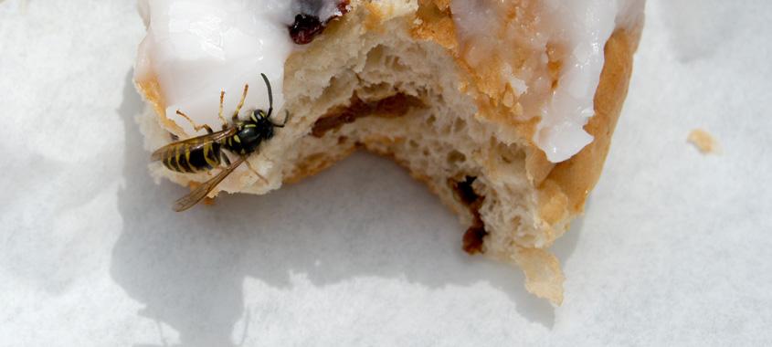 Wespen vertreiben – Wespe sitzt auf Süßspeise