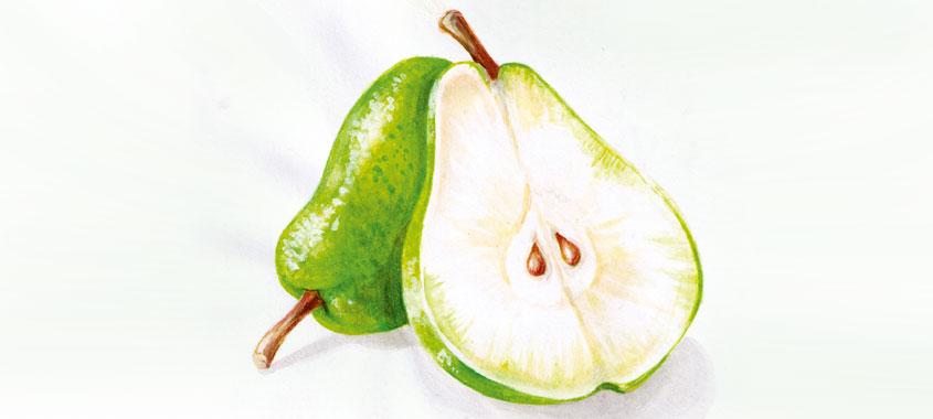 Illustration einer Birne