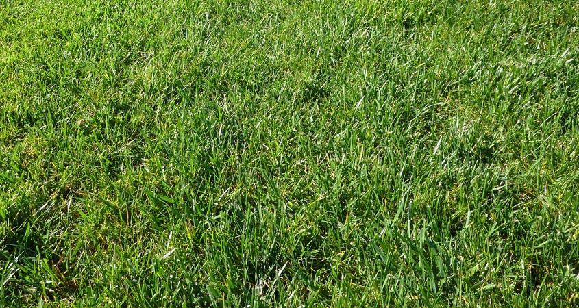 gruenes gras rasen duenger